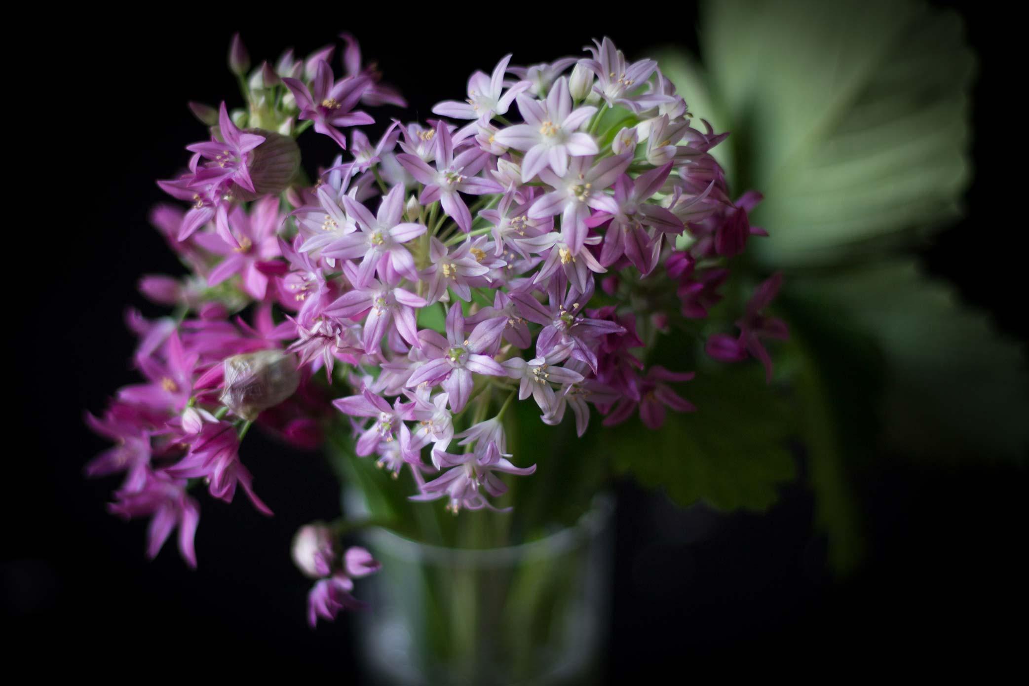 Fleurs-d'ail-décoratif-----Renards-Gourmets